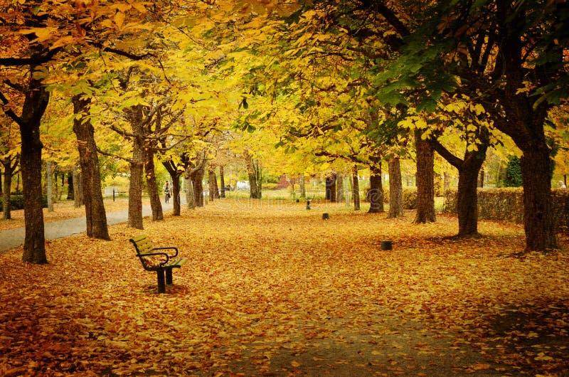 Droga przemian w jesieni. Tekstura konceptualni wizerunki obraz royalty free