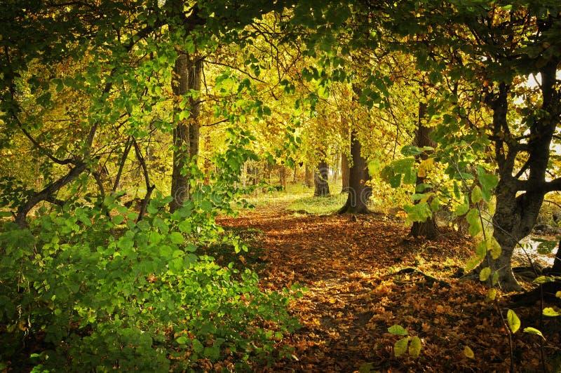 Droga przemian w jesieni. Tekstura konceptualni wizerunki obrazy royalty free