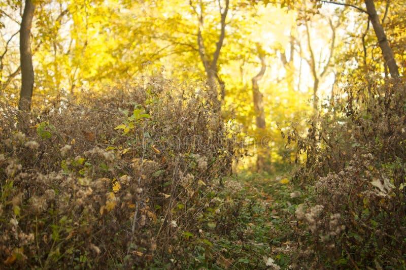 Droga przemian w lesie obrazy royalty free