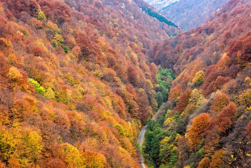 Droga przez kolorowego lasowego ulistnienia zdjęcie royalty free