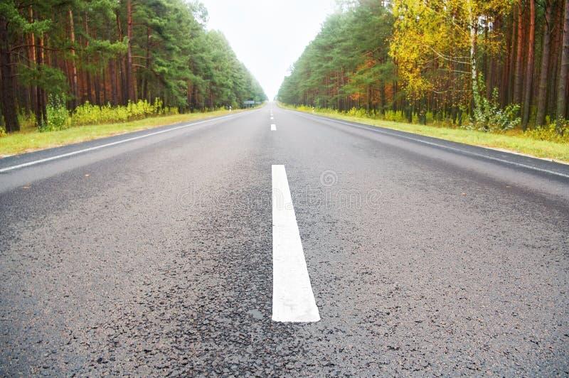 Droga przez lasu zdjęcia stock