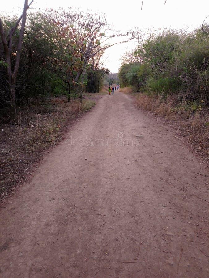 Droga przez lasu lub dżungli zdjęcie royalty free