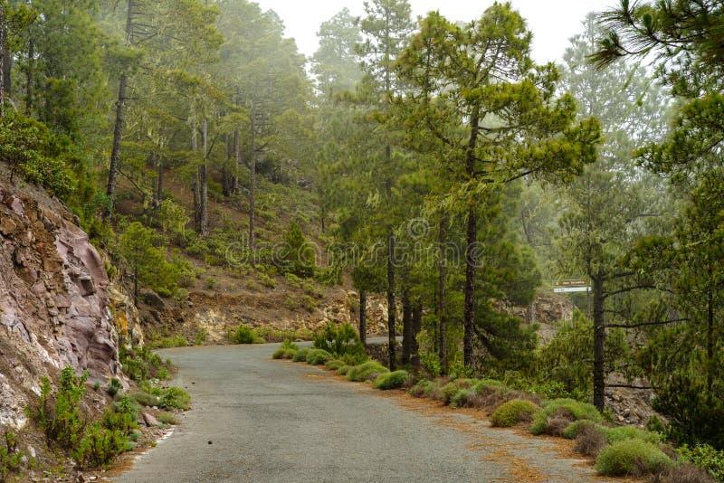 Droga przez mgłowego lasu Tamadaba, Gran Canaria fotografia stock