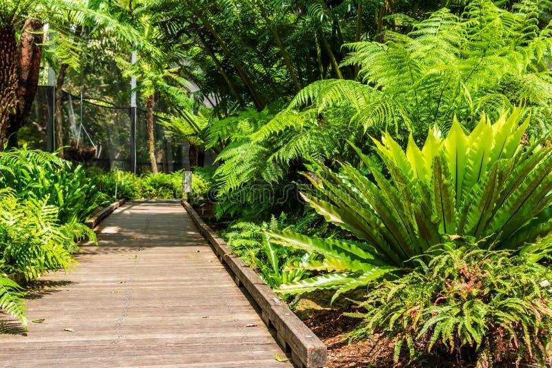 Droga przez ogród obrazy stock