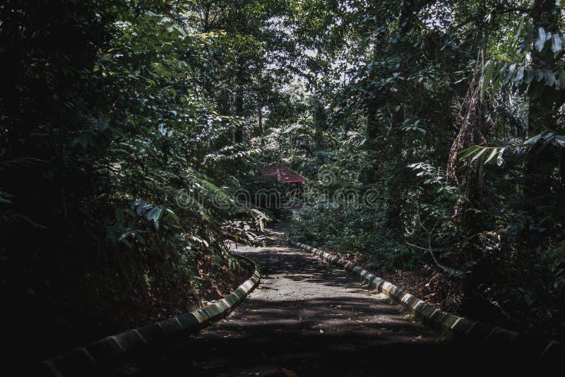 droga przyrody zdjęcia royalty free