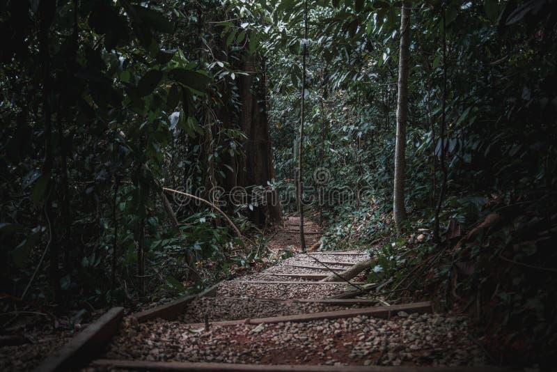 droga przyrody obrazy royalty free