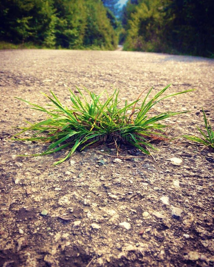 Droga, trawa, lato, las, zakończenie zdjęcia stock