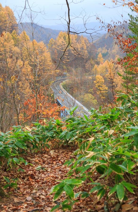 Droga wśród jesień lasu w Nakatsugawa dolinie - Yama, Fukushima, Japonia fotografia royalty free