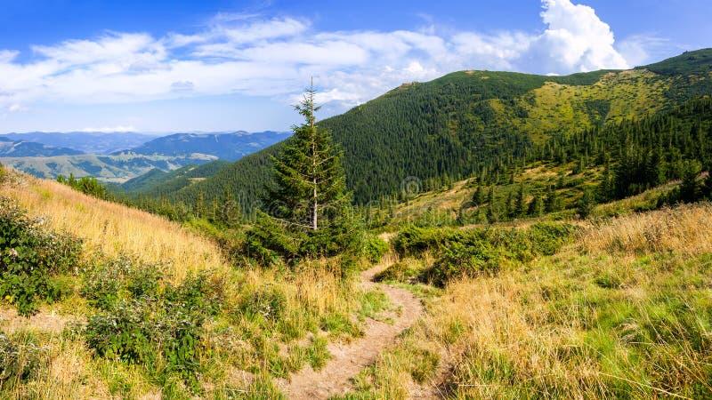Droga w Carpathians zdjęcia stock