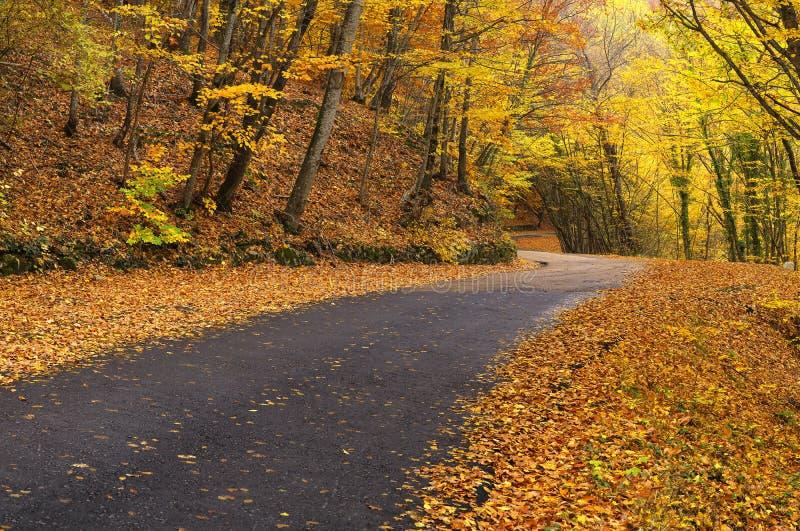 Droga w jesień lesie zdjęcie royalty free