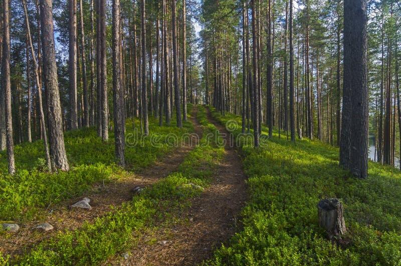 Droga w Karelian lesie obraz stock