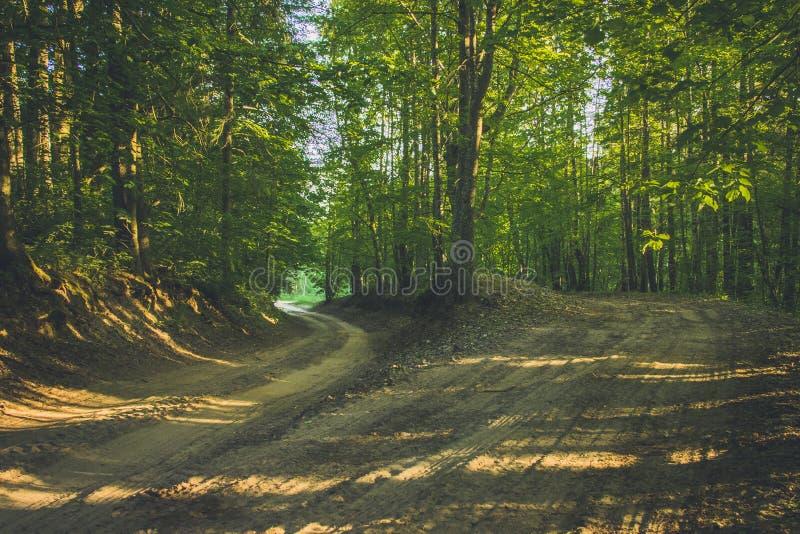 Droga w lasowym wczesnym wiosna ranku obraz stock