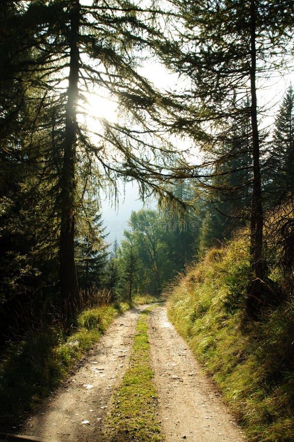 Droga w lesie zdjęcia stock