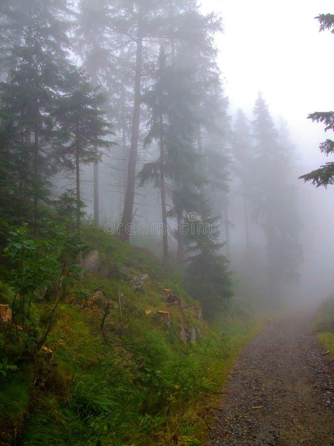 Droga w lesie w gęstej mgle zdjęcie royalty free