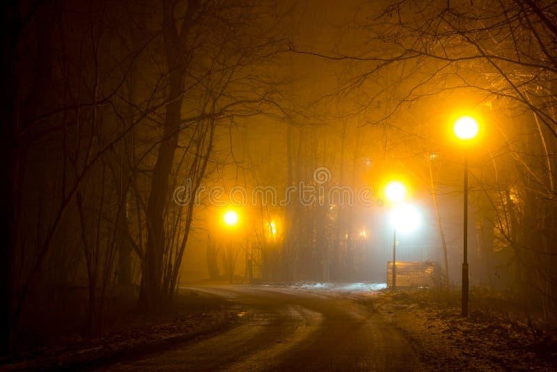 Droga w lesie podczas gęstej mgły obrazy royalty free