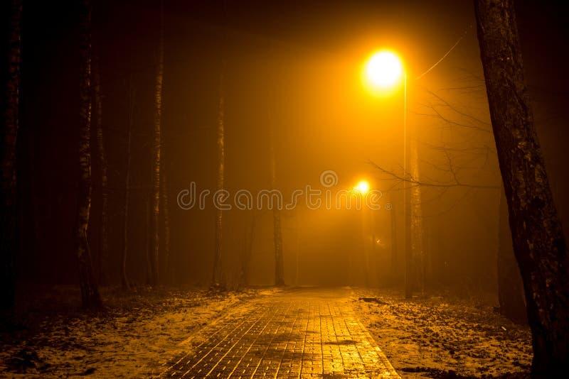Droga w lesie podczas gęstej mgły obraz stock