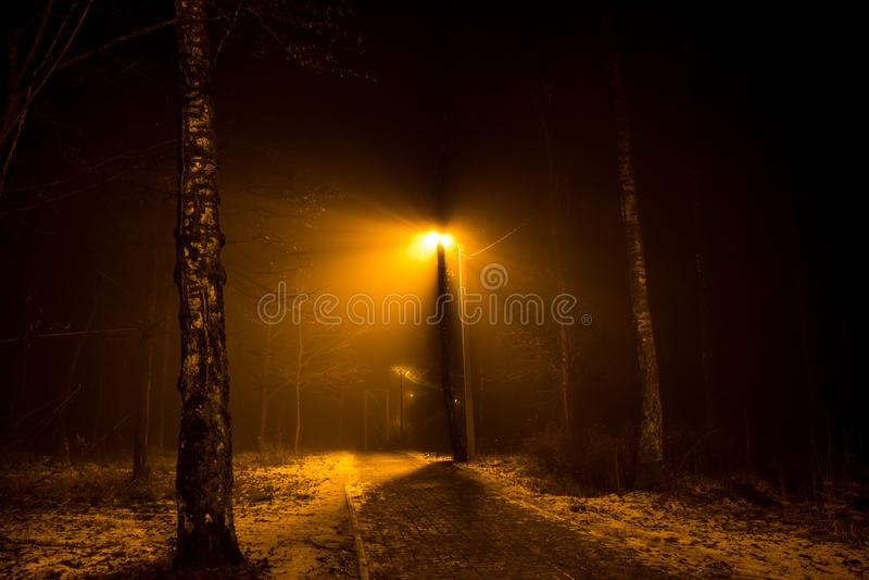 Droga w lesie podczas gęstej mgły zdjęcie stock