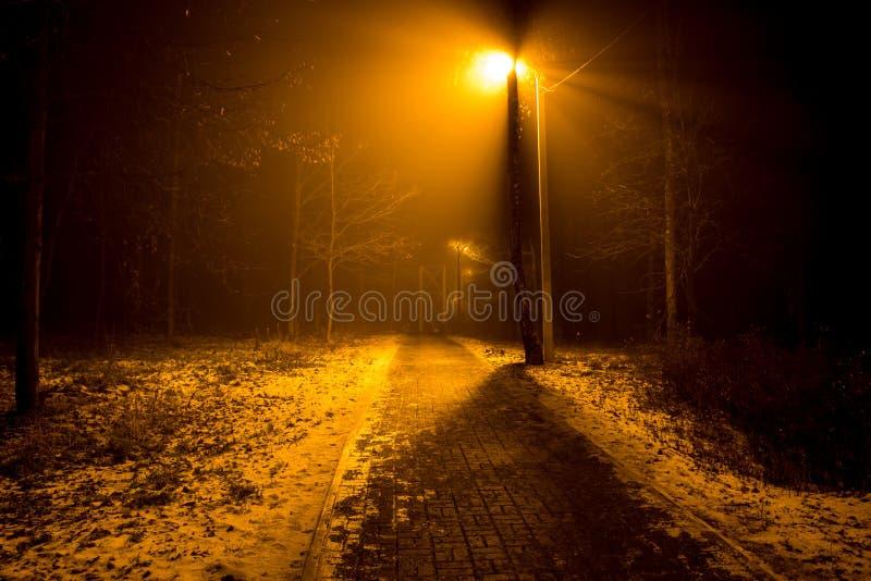 Droga w lesie podczas gęstej mgły zdjęcie royalty free