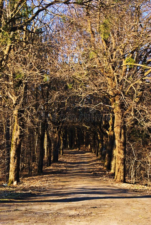 Droga w lesie, spirng zdjęcie royalty free