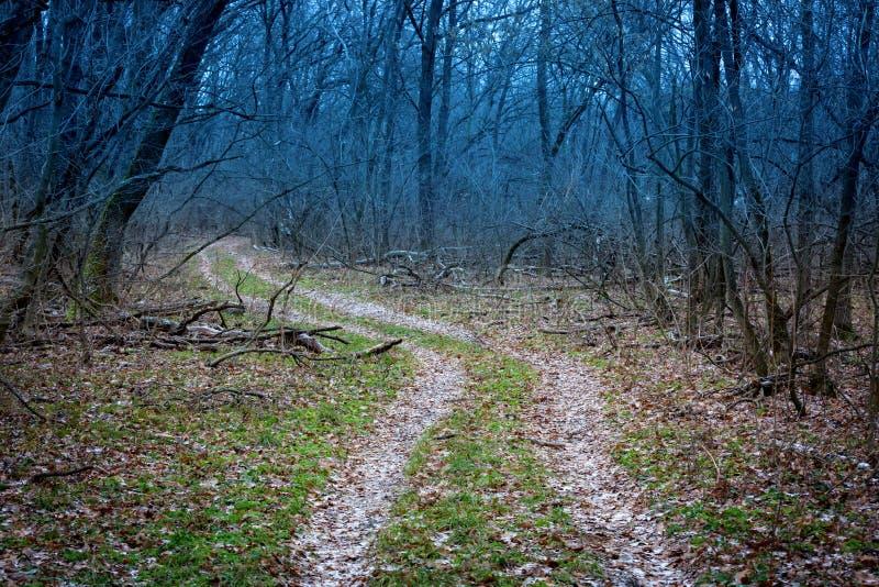 Droga w tajemnica lesie zdjęcia stock