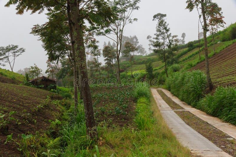 Droga w tropikalnych górach Ślad w halnych chmurach i mgle zdjęcia royalty free