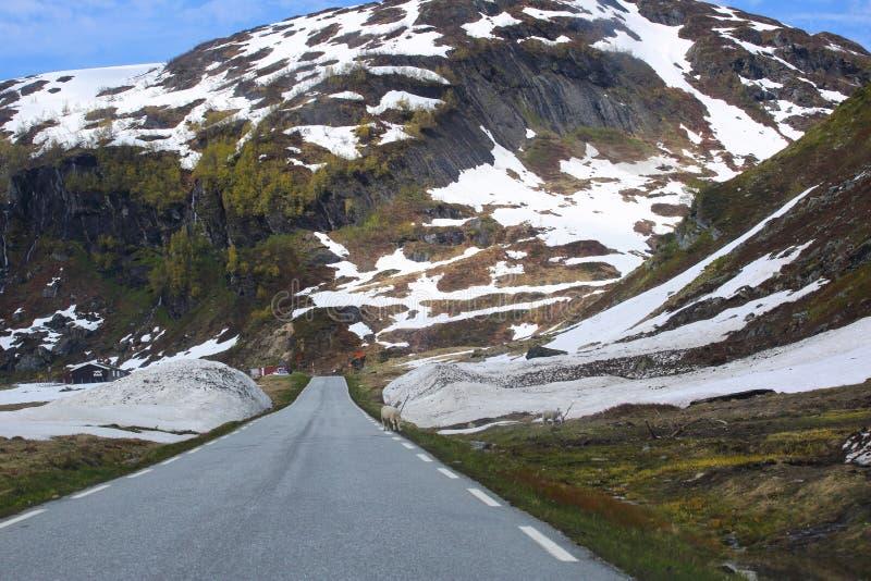 Droga w wiosen górach zdjęcie royalty free