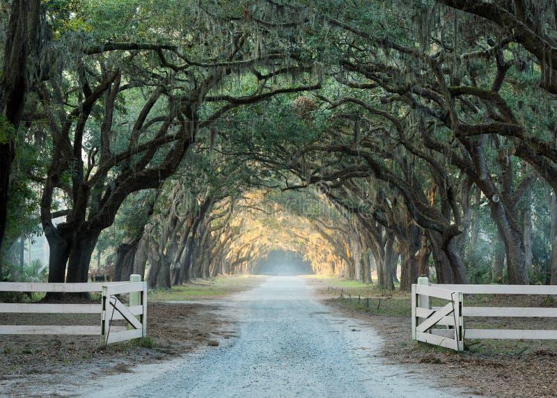Droga wykładająca z dębowymi drzewami obrazy royalty free