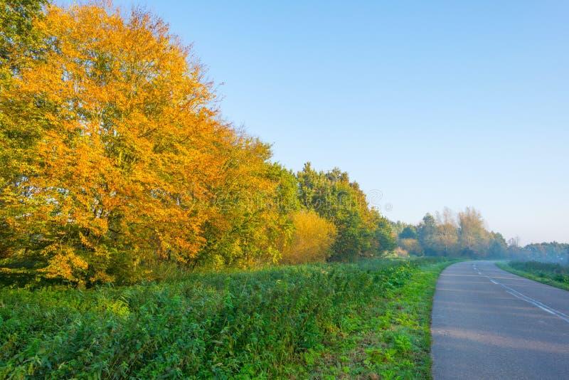 Droga wzdłuż drzew w spadku barwi przy wschodem słońca zdjęcia stock