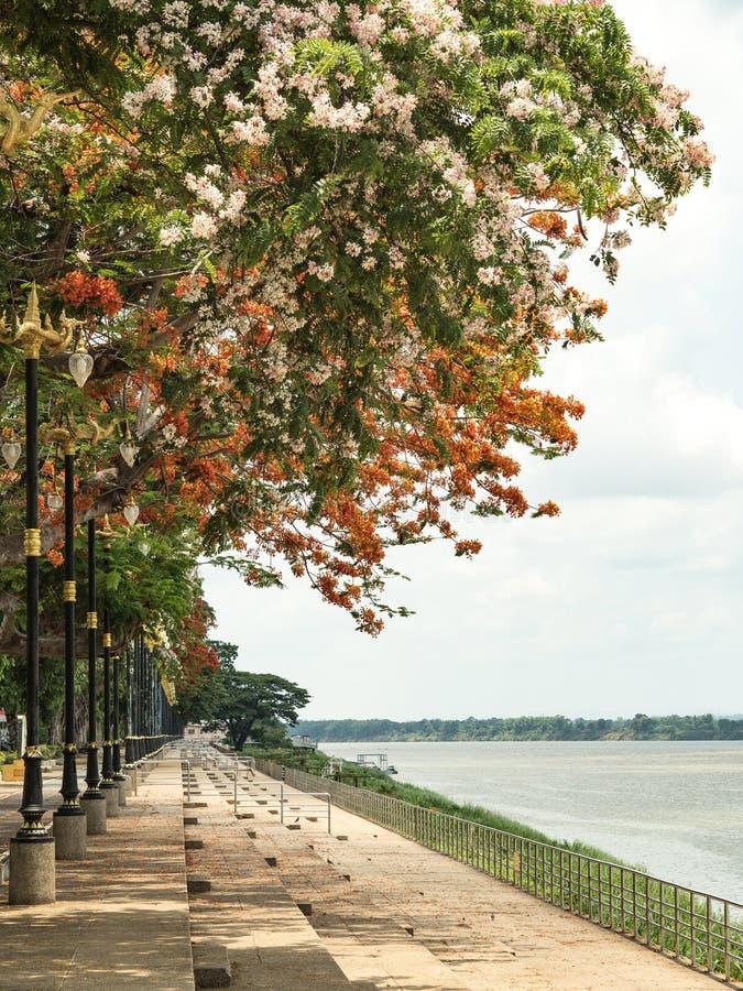 Droga wzdłuż Mekong rzeki fotografia stock