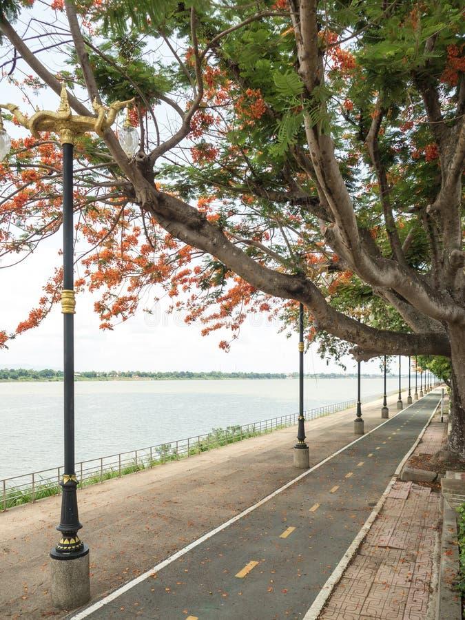 Droga wzdłuż Mekong rzeki fotografia royalty free