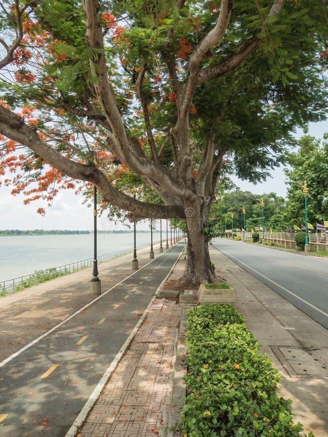 Droga wzdłuż Mekong rzeki zdjęcie stock