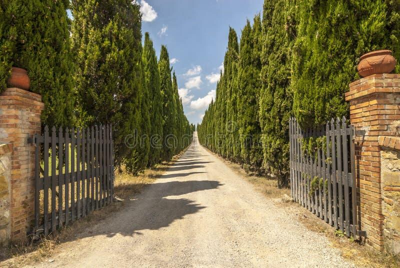 Droga z cyprysami w Tuscany fotografia royalty free