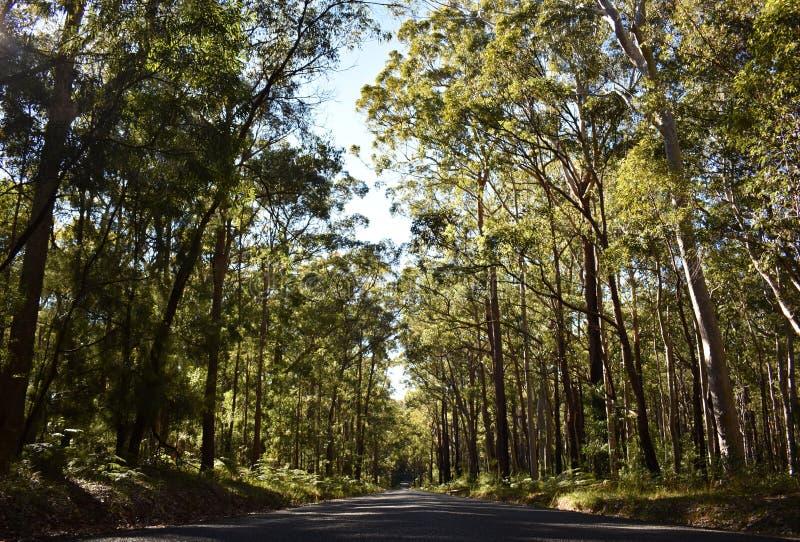 Droga z drzewami fotografia royalty free