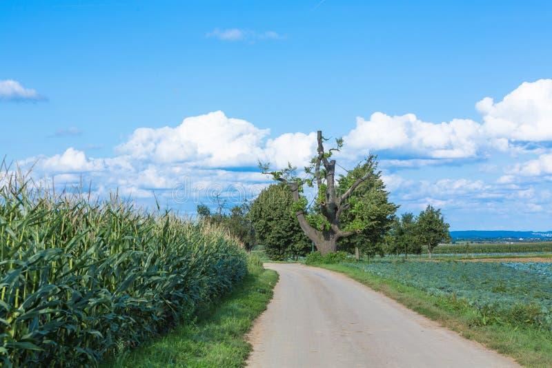 Droga z drzewem zdjęcia stock
