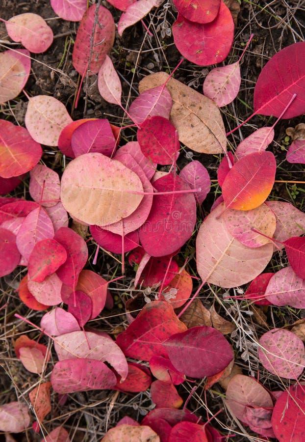 Droga zakrywa z czerwonymi liśćmi w jesieni obrazy stock