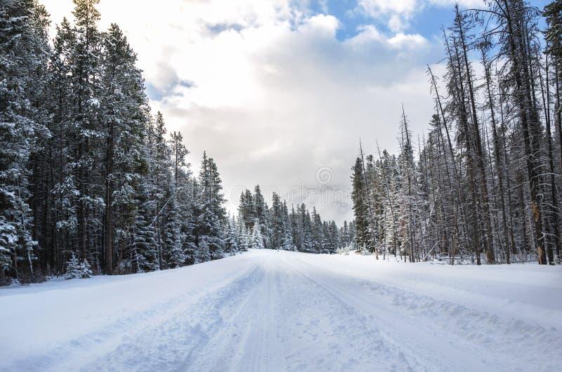 Droga zakrywająca w Świeżym śniegu przez lasu fotografia stock