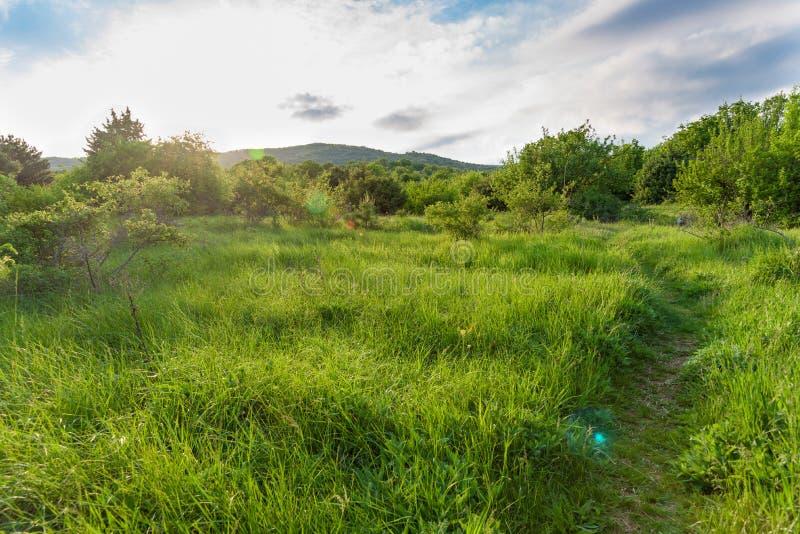 Droga zielony śródpolny pogodny świt obraz stock