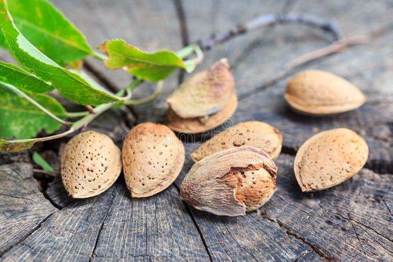 Droge Amandel in shells op het hout royalty-vrije stock foto