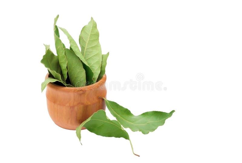 Droge aromatische baaibladeren in een houten die kom op wit wordt geïsoleerd Foto van de oogst van de laurierbaai voor de zaken v royalty-vrije stock foto's