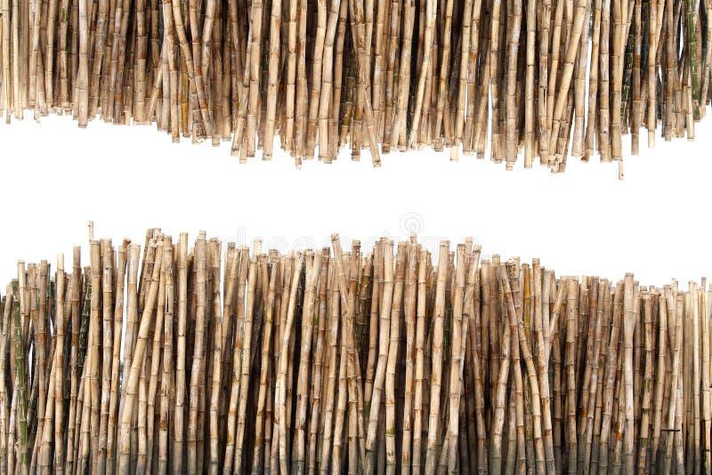 Droge bamboestelen royalty-vrije stock afbeeldingen