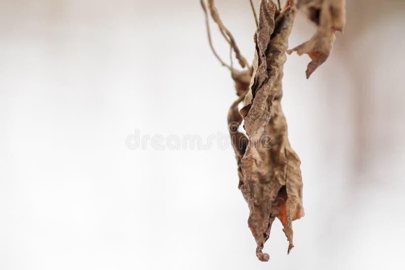 Droge bladeren Bloemen in de winter stock fotografie