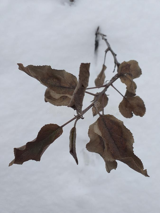 Droge bladeren in de winter royalty-vrije stock afbeeldingen