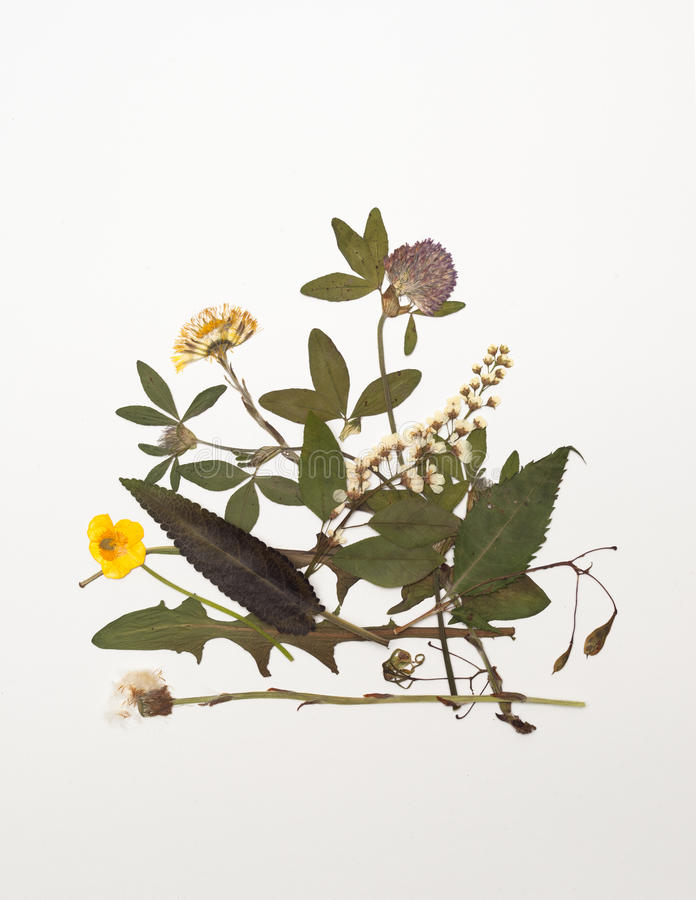 Droge bladeren en bloemen van weide geneeskrachtige kruiden royalty-vrije stock afbeeldingen