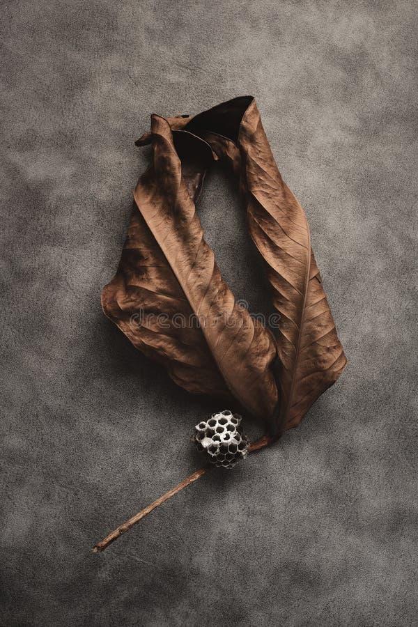 Droge bladeren met hoornnnnbos royalty-vrije stock fotografie