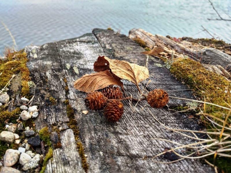 Droge bladeren op een oude boom royalty-vrije stock foto