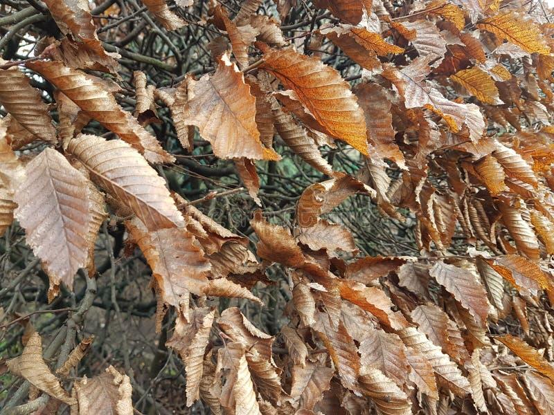 Droge bladeren van de winter royalty-vrije stock foto's