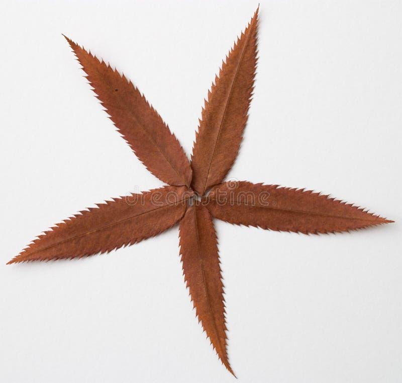 Droge bladsamenstelling stock foto