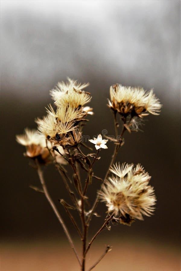 Droge bloem stock afbeeldingen