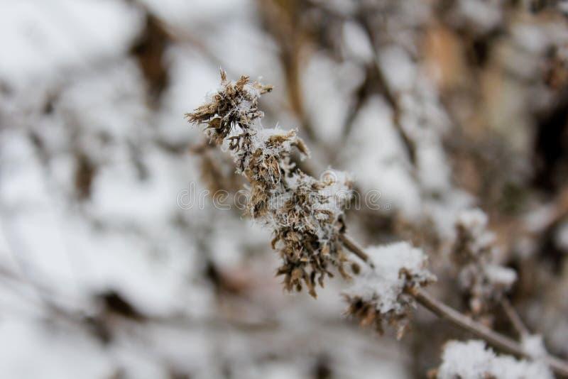 Droge bloem in de winter stock foto's