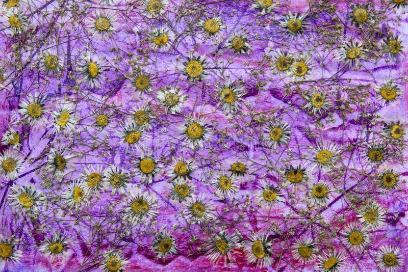 Droge bloemachtergrond royalty-vrije stock afbeelding